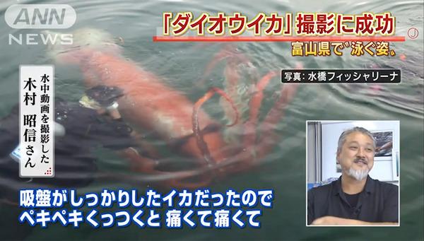 big-squid5_2619442a