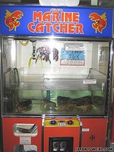 lobster_vending_machine