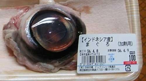 Tuna-Eyeball