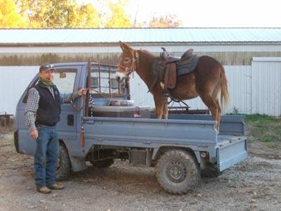 mini_truck_donkey