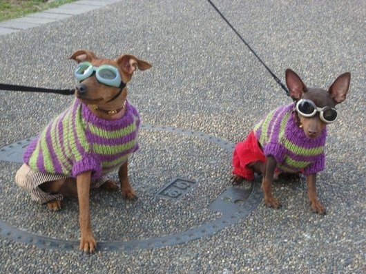 crazy-fashion-of-dogs-in-japan5