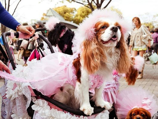 crazy-fashion-of-dogs-in-japan19